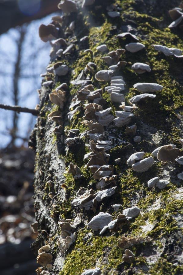 Paddestoel en mos stock afbeelding