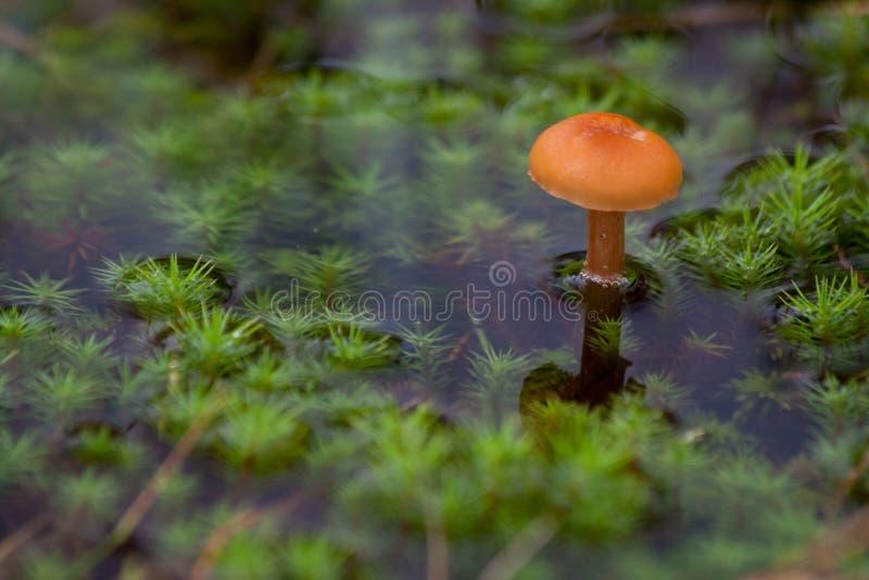 Paddestoel en mos in het water royalty-vrije stock afbeelding