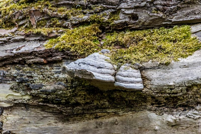 Paddestoel en mos op de schors van een gevallen boom stock foto's