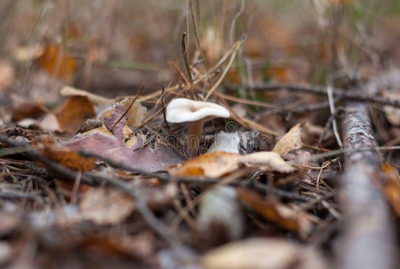 Paddestoel in het bos onder het gras royalty-vrije stock afbeeldingen