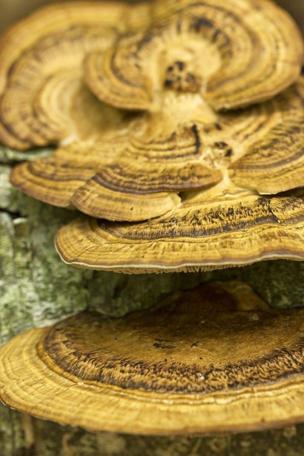 Paddestoel op een boom, macrofoto stock foto