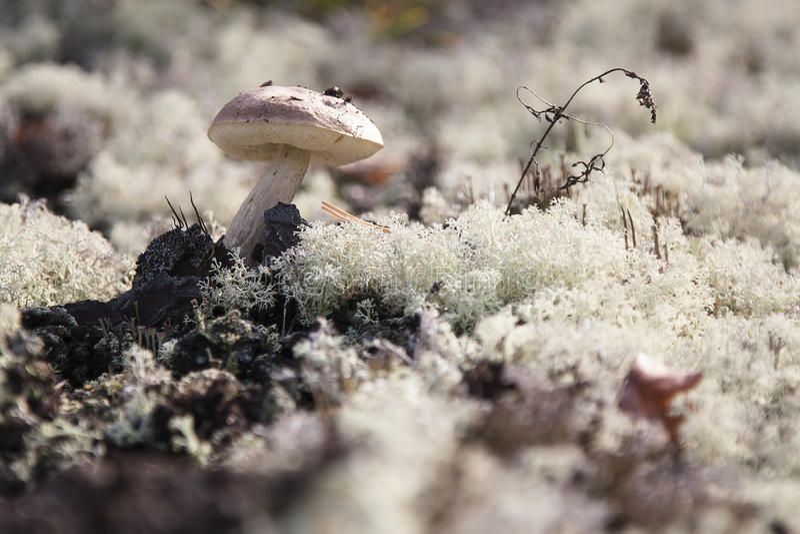 Paddestoel op het mos stock fotografie