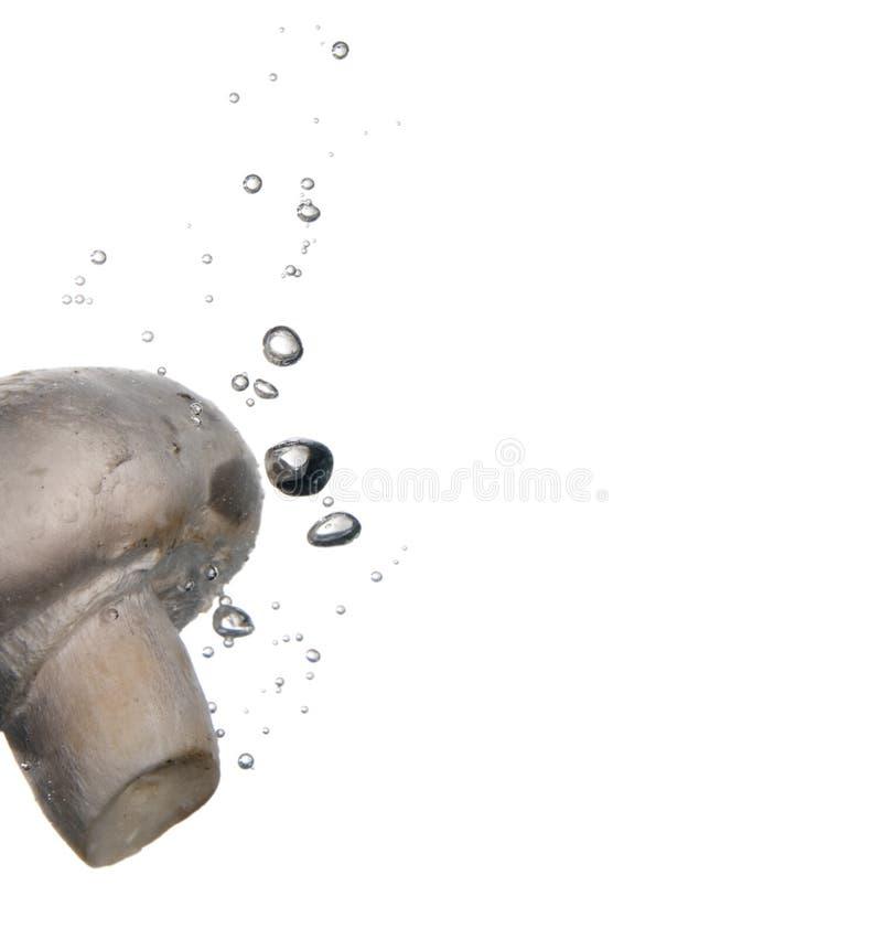 Paddestoel in water royalty-vrije stock afbeelding