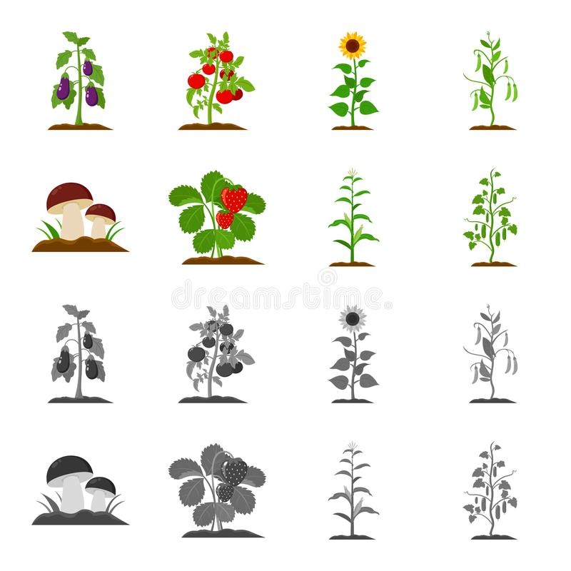 Paddestoelen, aardbeien, graan, komkommer Pictogrammen van de installatie de vastgestelde inzameling in beeldverhaal, de zwart-wi vector illustratie