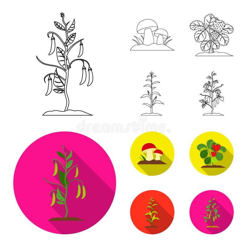 Paddestoelen, aardbeien, graan, komkommer Pictogrammen van de installatie de vastgestelde inzameling in overzicht, de vlakke voor royalty-vrije illustratie