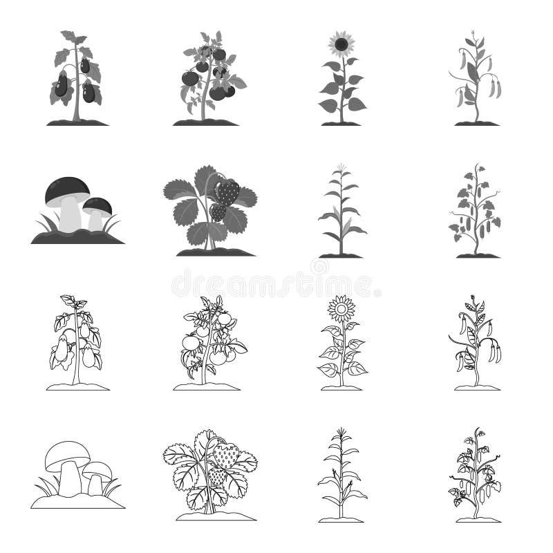 Paddestoelen, aardbeien, graan, komkommer Pictogrammen van de installatie de vastgestelde inzameling in overzicht, de zwart-wit v stock illustratie