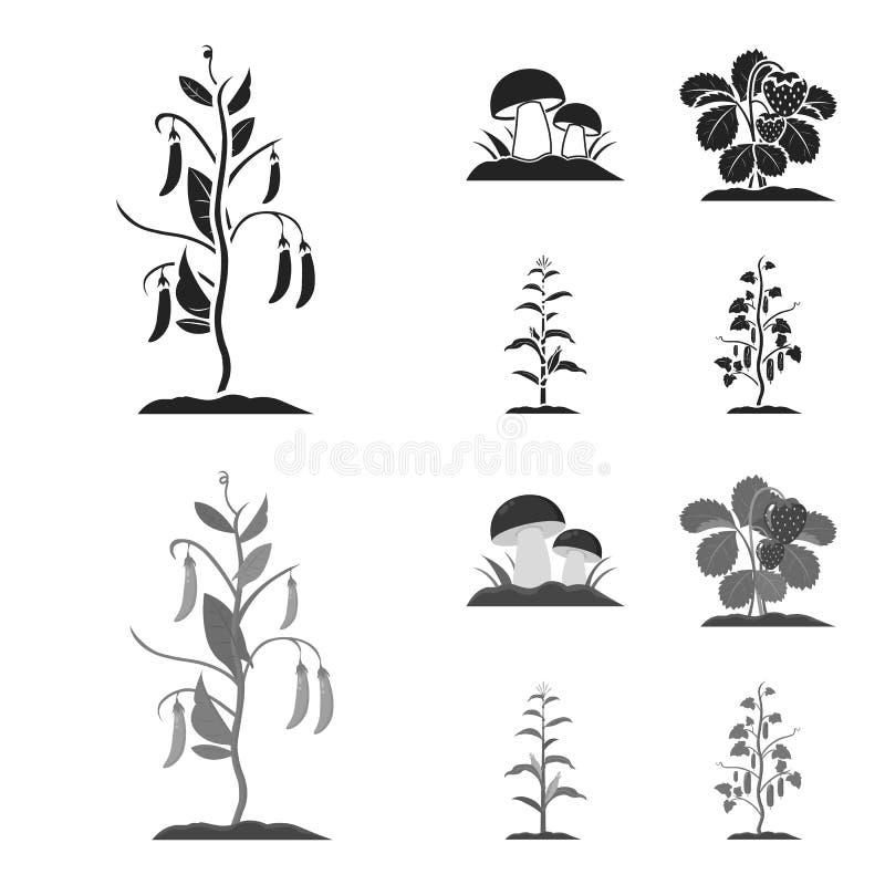 Paddestoelen, aardbeien, graan, komkommer Pictogrammen van de installatie de vastgestelde inzameling in zwarte, monochrom voorraa vector illustratie