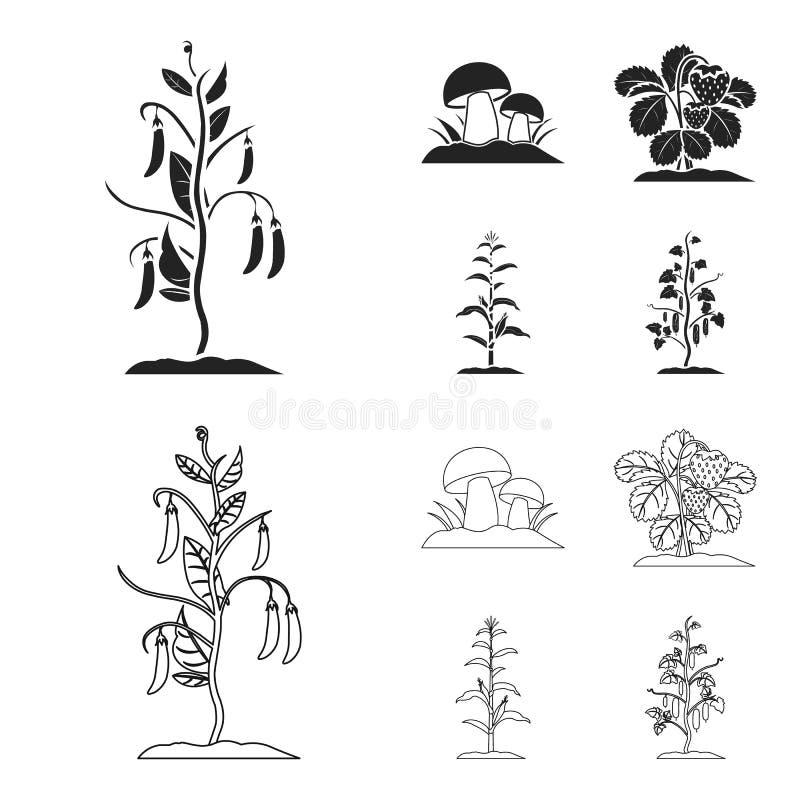 Paddestoelen, aardbeien, graan, komkommer Pictogrammen van de installatie de vastgestelde inzameling in zwarte, vector het symboo vector illustratie