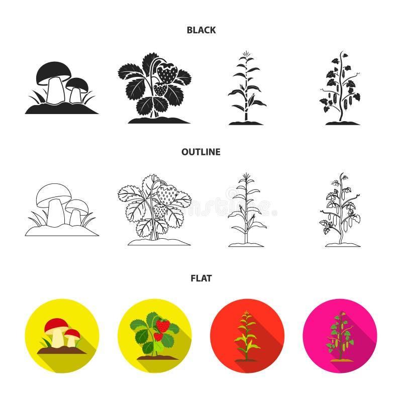 Paddestoelen, aardbeien, graan, komkommer Pictogrammen van de installatie de vastgestelde inzameling in zwarte, vlak, vector het  vector illustratie