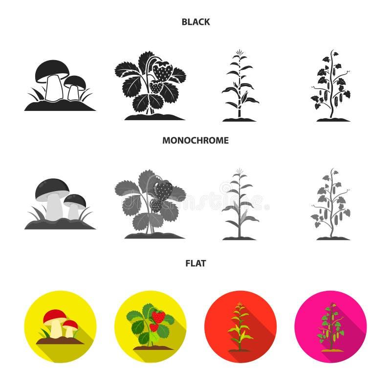 Paddestoelen, aardbeien, graan, komkommer Pictogrammen van de installatie de vastgestelde inzameling in de zwarte, vlakke, zwart- royalty-vrije illustratie