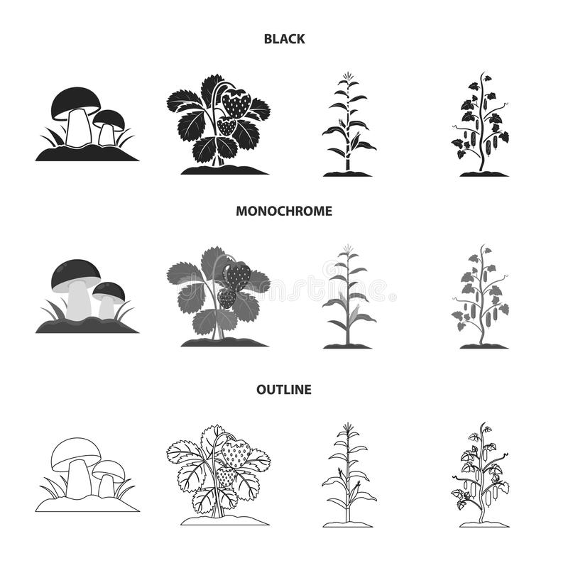 Paddestoelen, aardbeien, graan, komkommer Pictogrammen van de installatie de vastgestelde inzameling in zwarte, zwart-wit, vector royalty-vrije illustratie