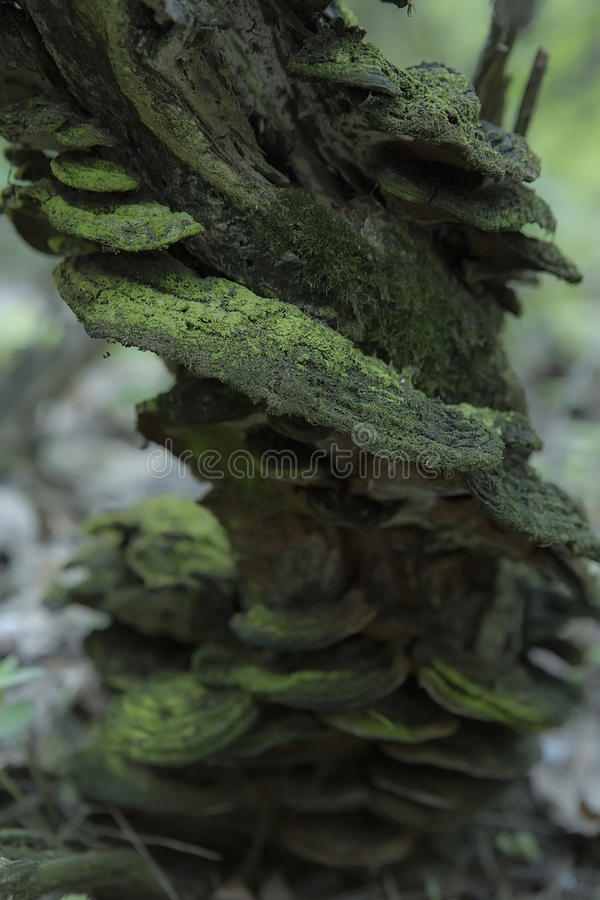 Paddestoelen die op een Boomstomp groeien in het Bos stock foto's