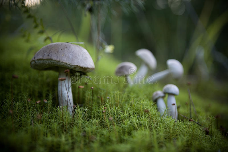 Paddestoelen in het bos stock fotografie