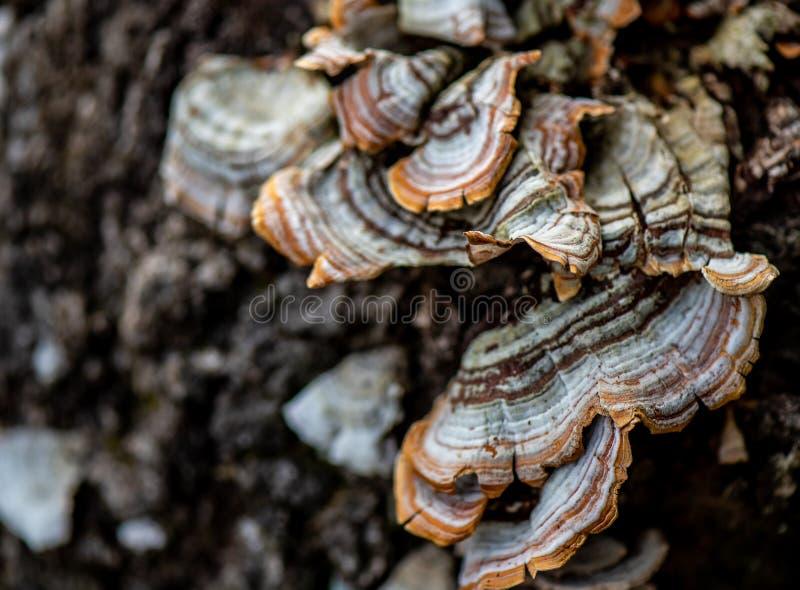 Paddestoelen in het bos stock afbeelding