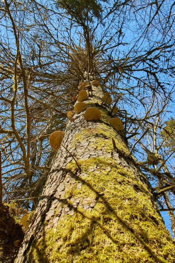 Paddestoelen op een boom in de rivier gauchach canion in het zwarte bos in Duitsland royalty-vrije stock foto
