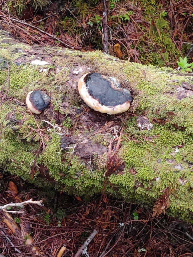 Paddestoelen in tropisch regenwoud stock foto's