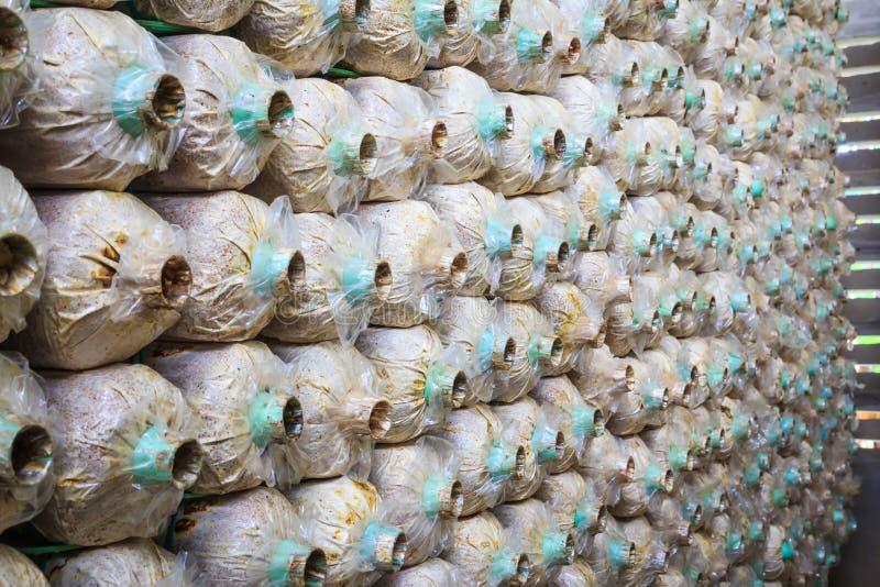 Paddestoelenfles royalty-vrije stock foto
