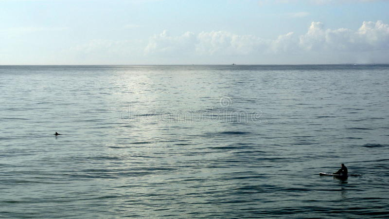 Paddle internu dopatrywania delfin fotografia stock