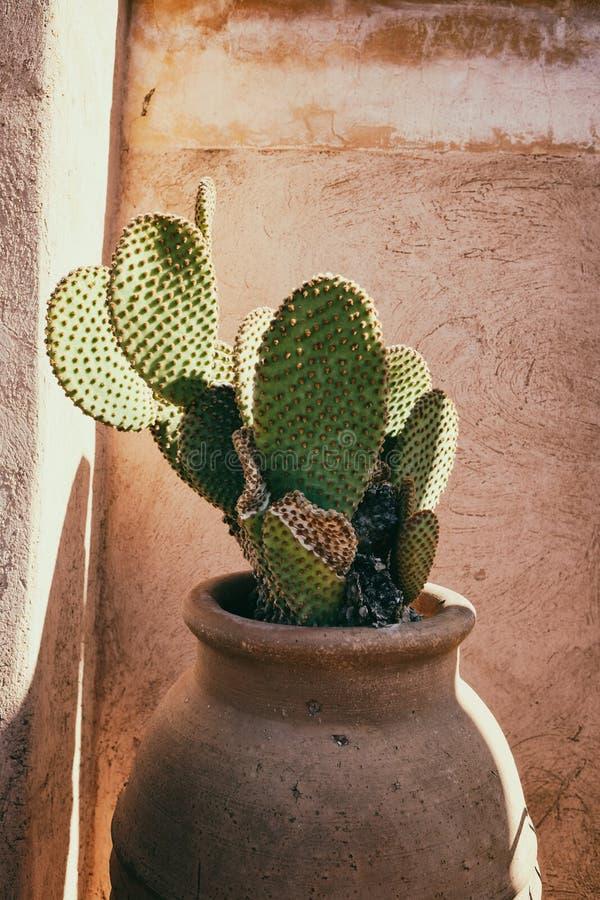 Paddle kaktusowy garnek w Marrakech w Maroko zdjęcie royalty free