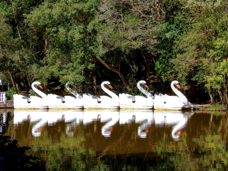Paddleboats stock photo