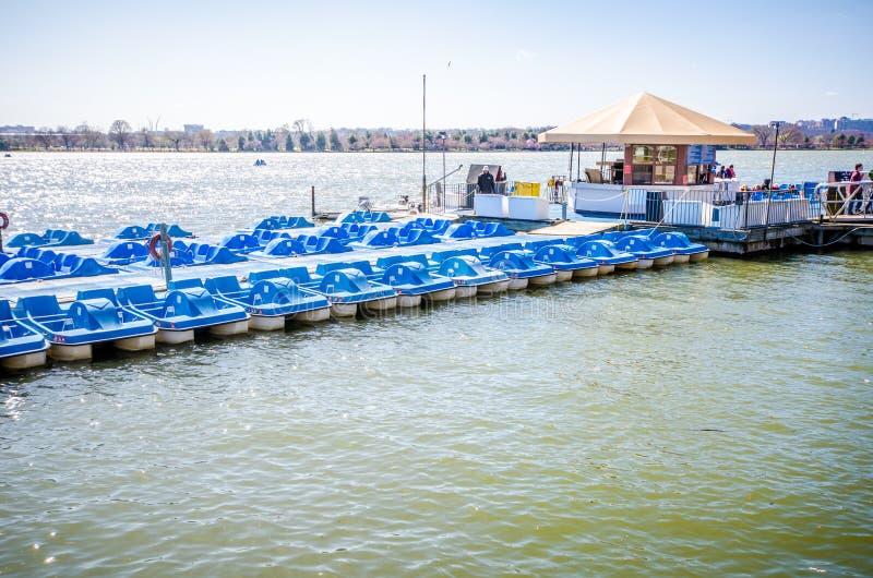 Paddleboats voor huur op het getijbekken in Washington DC Deze activiteit van de watersport is populair met stock foto's