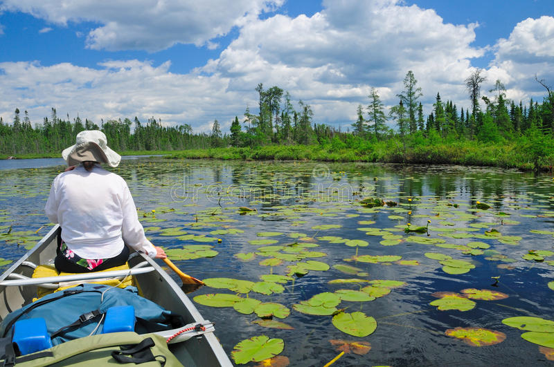 Paddling through the lily pads. On Crooked Lake in the Boundary waters royalty free stock photography