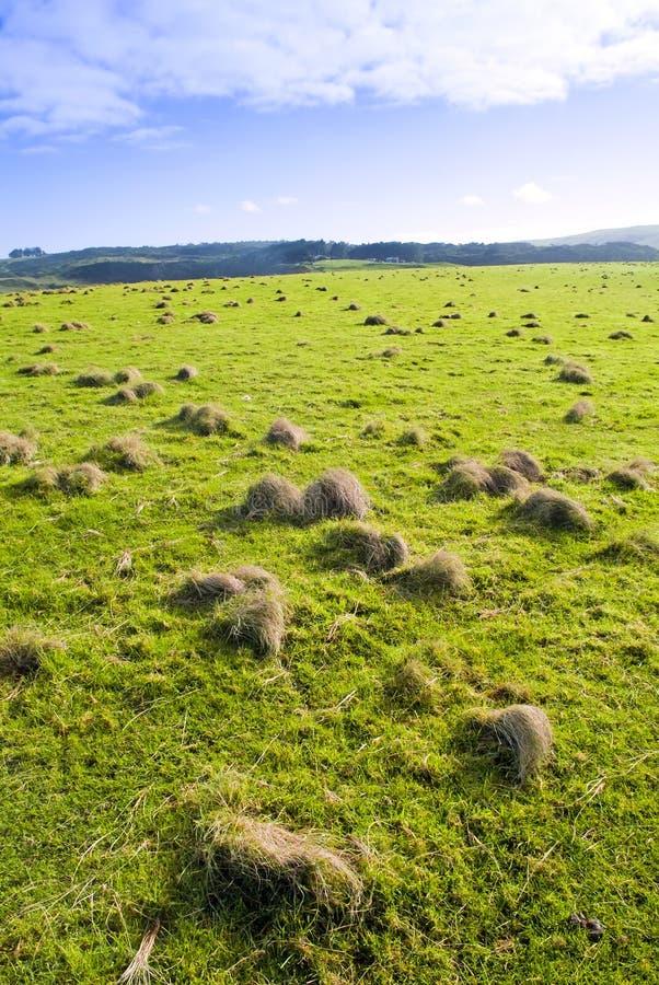 Download Paddock stock photo. Image of grow, horizon, country - 17422330