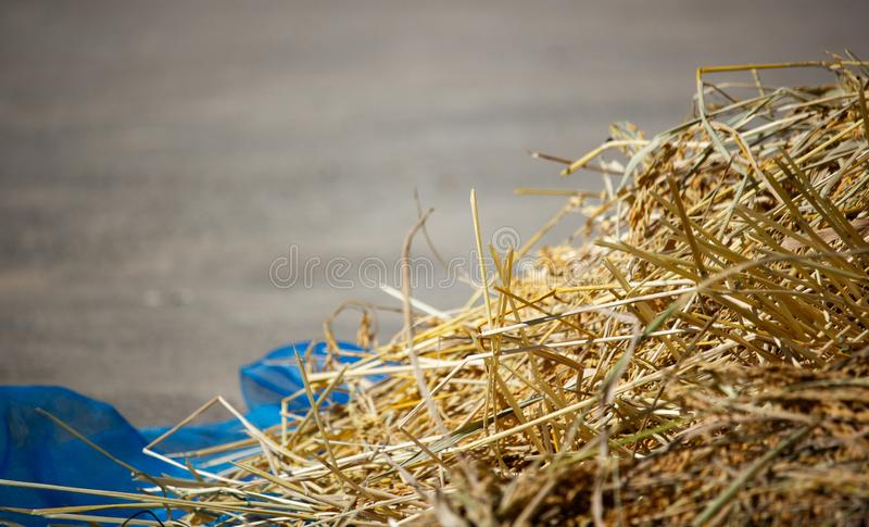 Paddy and dry straw pile on sunny day stock images