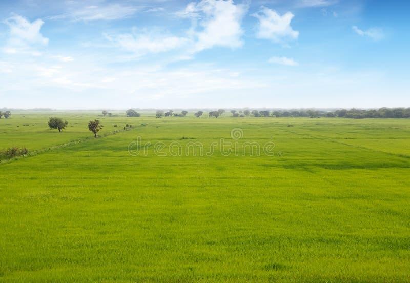 Paddy Field images libres de droits