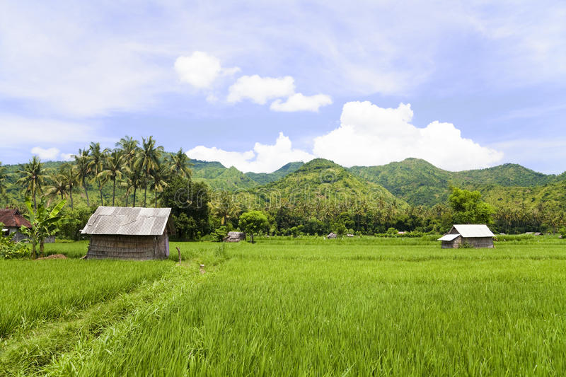 Download Paddy Field, Amed, East Bali, Indonesia Stock Image - Image: 14288983