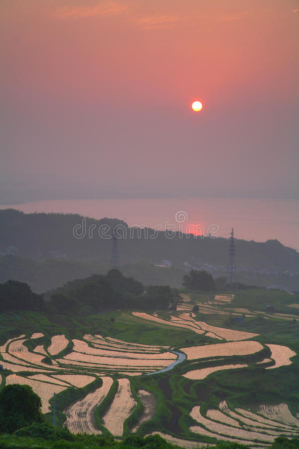 Free Paddy Field And Sunrise Royalty Free Stock Photo - 66858205