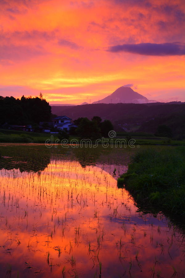 Free Paddy Field And Sunset Stock Image - 66858261