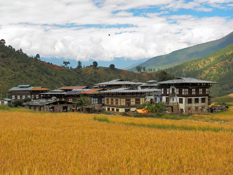 Paddy Field au Bhutan photo stock