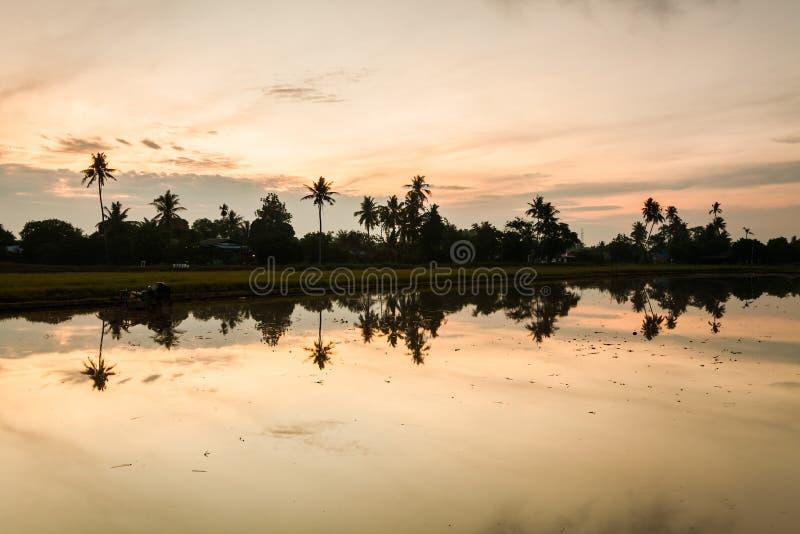 Paddy Field in Bukit Mertajam Penang, Malaysia. Reflection Sunrise in Paddy Field in Bukit Mertajam Penang, Malaysia royalty free stock photos
