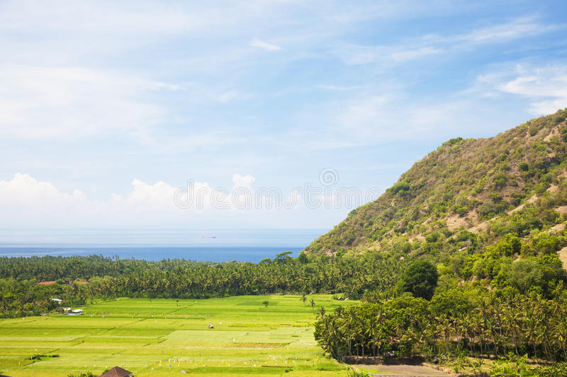 Download Paddy Field And Coast, Amed, East Bali, Indonesia Royalty Free Stock Photos - Image: 14288878