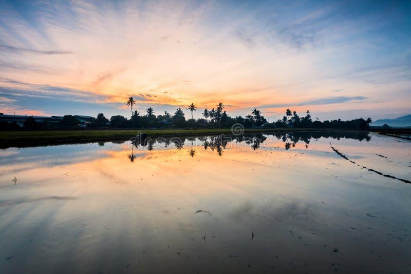 Paddy Field en Bukit Mertajam Penang, Malasia imágenes de archivo libres de regalías