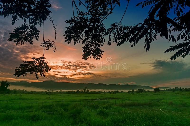 Paddy Field And Sunrise royalty free stock images
