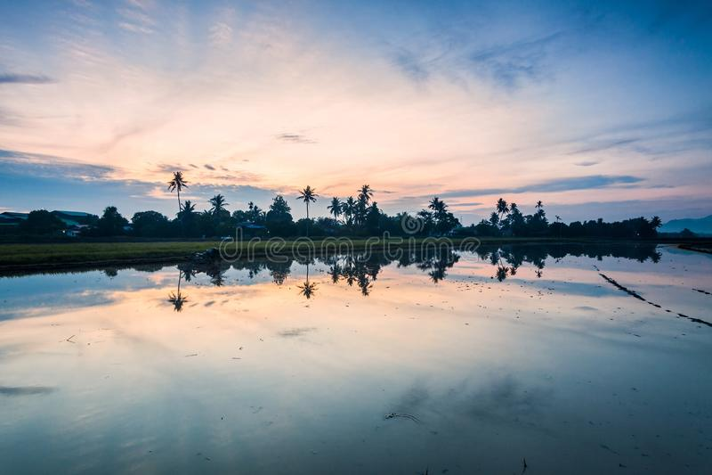 Paddy Field i Bukit Mertajam Penang, Malaysia royaltyfri foto