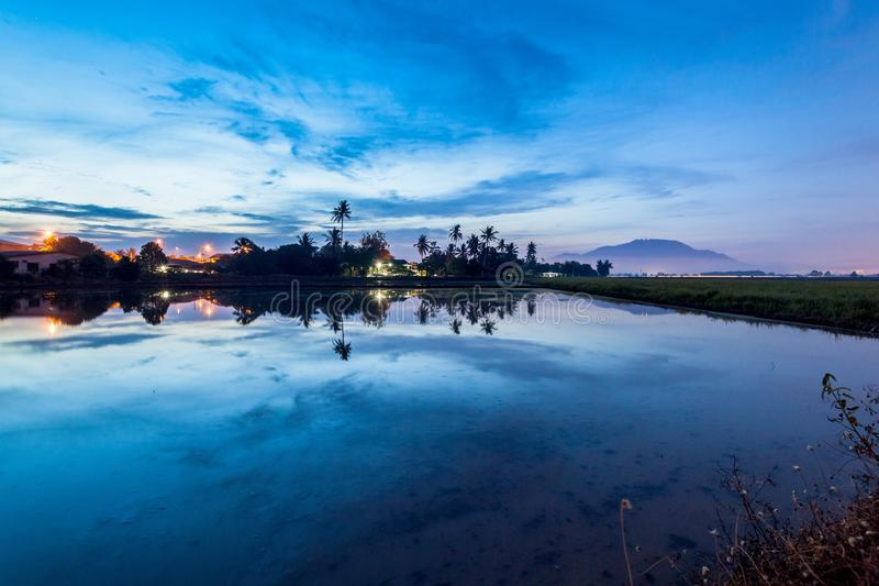 Paddy Field i Bukit Mertajam Penang, Malaysia arkivbilder