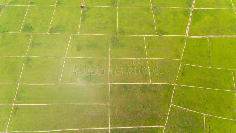 Paddy Field Kota Belud imagens de stock royalty free