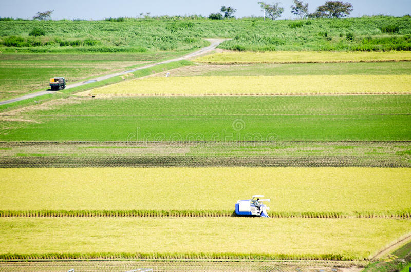 Paddy Field nella stagione Giappone del raccolto immagine stock