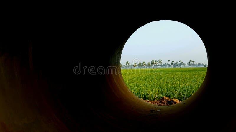 paddy field royalty free stock photos
