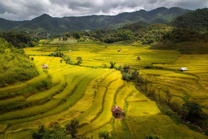 Paddy Field Terraced nas montanhas altas em Mea La Noi City, Mae Hong Son imagem de stock royalty free