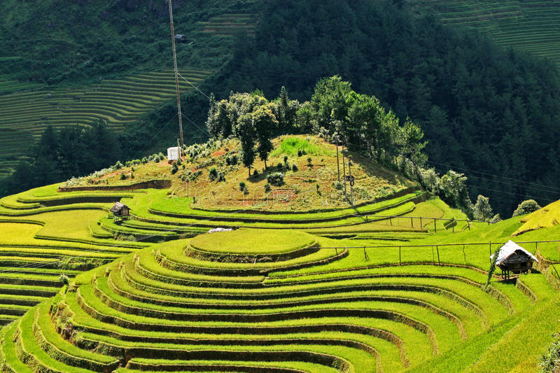 Download Paddy Field Under The Sunlight Stock Photo - Image: 35556798
