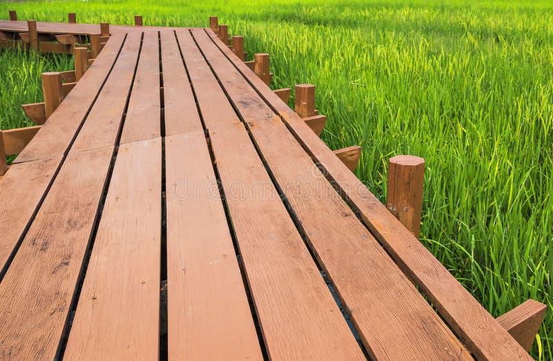 Paddy field. Wooden walkway across golden paddy field royalty free stock photos