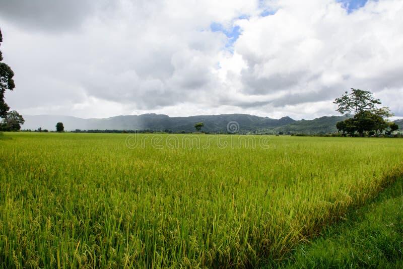 Paddy Fields i det Kayah tillståndet, Myanmar royaltyfria bilder