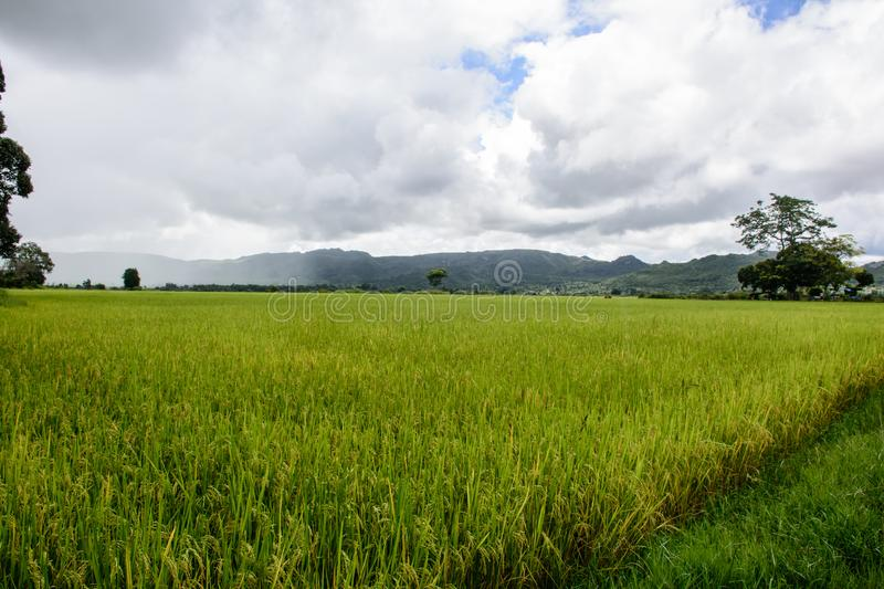 paddy fields with mountains and cloudy sky background royalty free stock images