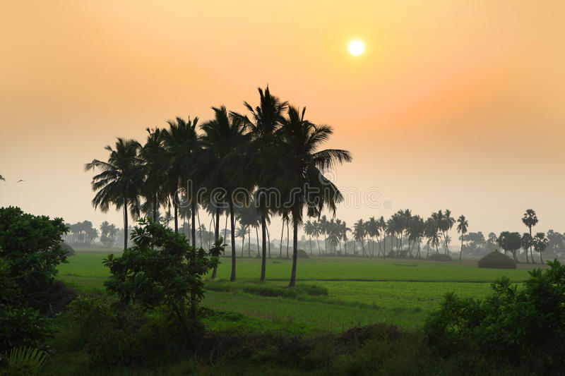 Paddy fields landscape in Andhra pradesh royalty free stock images