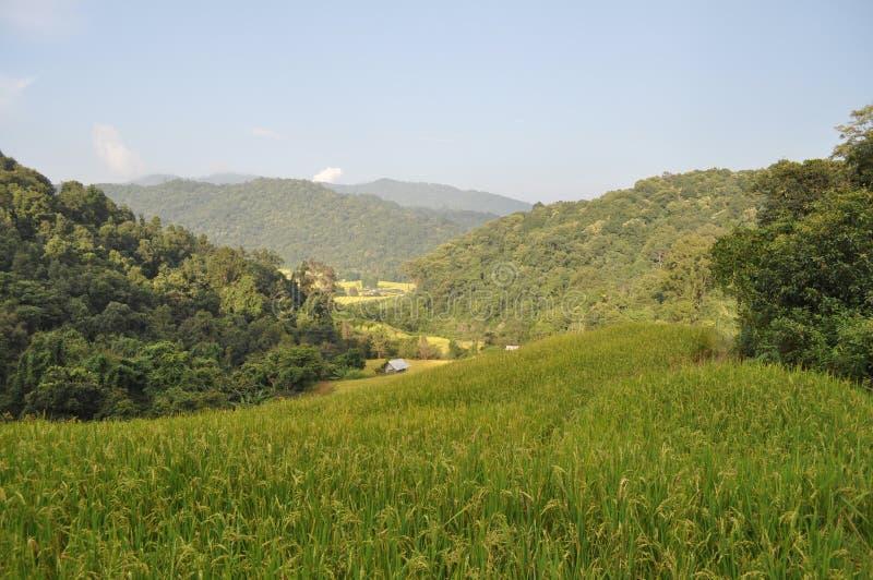 Paddy Mountain royaltyfri fotografi