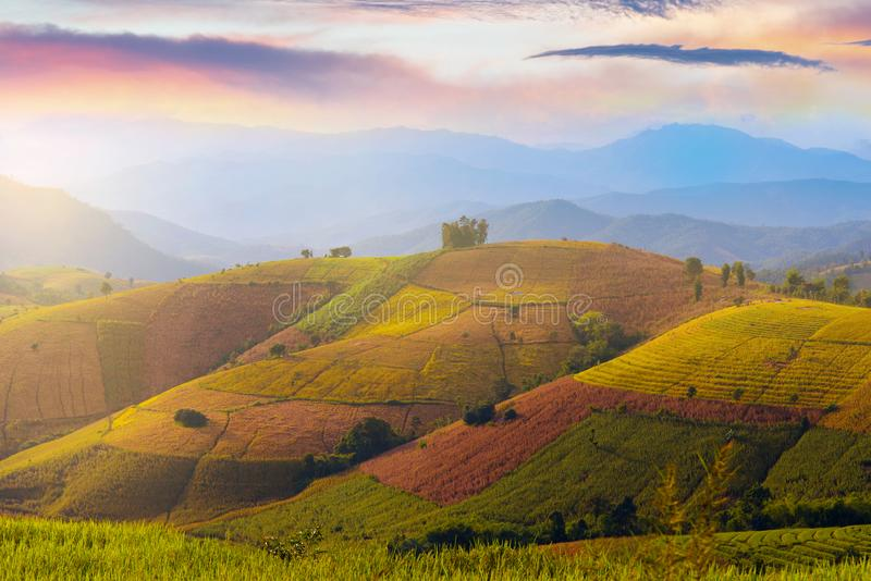 Paddy rice field landscape view in Baan Pa Bong Piang in Chiangmai royalty free stock photography